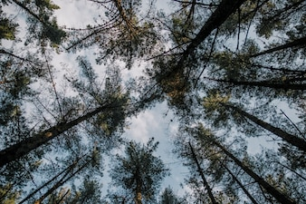 Low section view of tall trees against sky