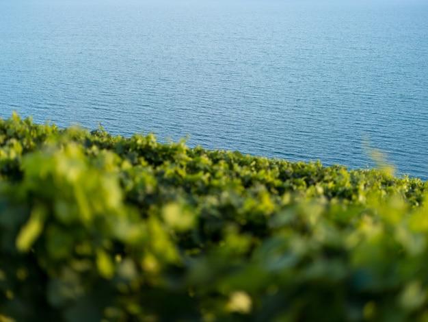 Colpo basso di una bellissima vegetazione sulla collina vicino all'oceano con un primo piano sfocato