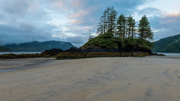 Low tide sandy beach with trees on island at san josef bay on vancouver island, british columbia, canada.