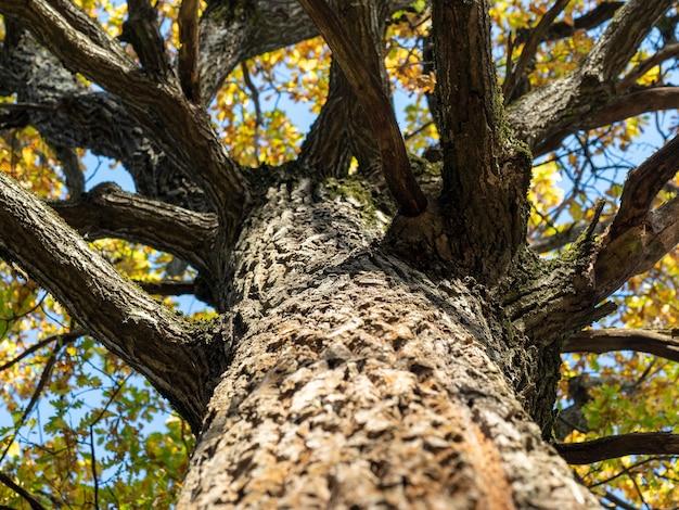 秋の木の視角が低く、セレクティブフォーカス