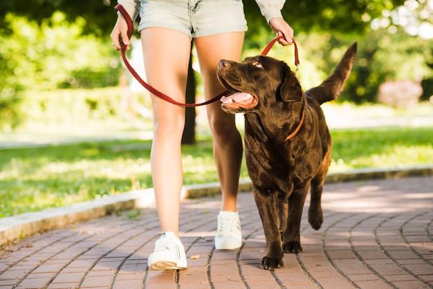 공원에서 그녀의 강아지와 함께 산책하는 여자의 lowsection보기