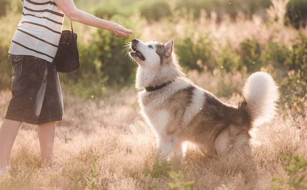 Верная собака с девушкой во время прогулки