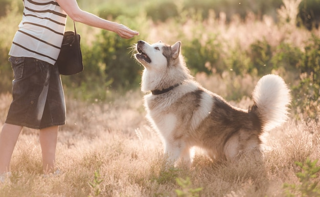 Loyal dog with girl while walking