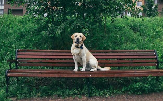 Верные чистокровные собаки в ошейнике, сидя на скамейке возле зеленой травы и кустов в летний день в парке