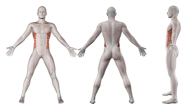 Мышцы lumbars