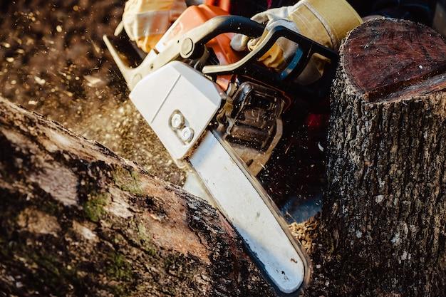 Дровосек пила дерево с бензопилой на лесопилке