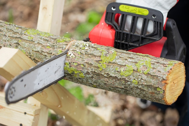 Lumberman in gloves works with chainsaw and sawing a tree in the forest