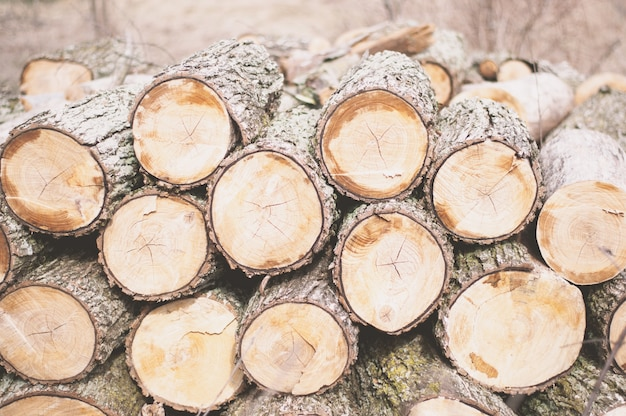 Lumbers tagliati con l'ascia uno sull'altro durante il giorno