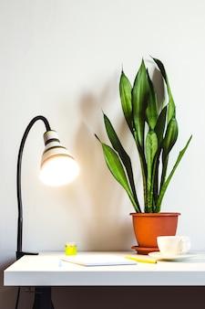 책상 위의 빛나는 줄무늬와 관엽식물 산세베리아. 조롱을 위한 흰 벽.