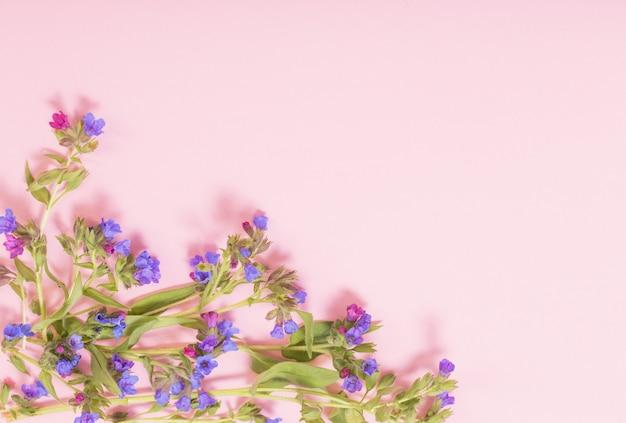 분홍색 종이 배경에 lungwort 꽃