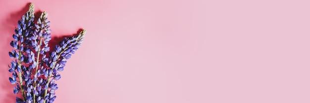 ピンクの背景に満開の青いライラック色のルピナスの花が平らに横たわっていた。テキスト用のスペース。バナー