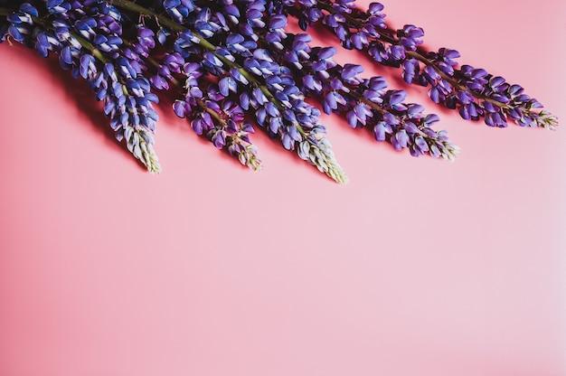 ピンクの背景に満開の青いライラック色のルピナスの花が平らに横たわっていた。テキスト用のスペース