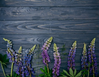 Lupine flowers on a wooden background