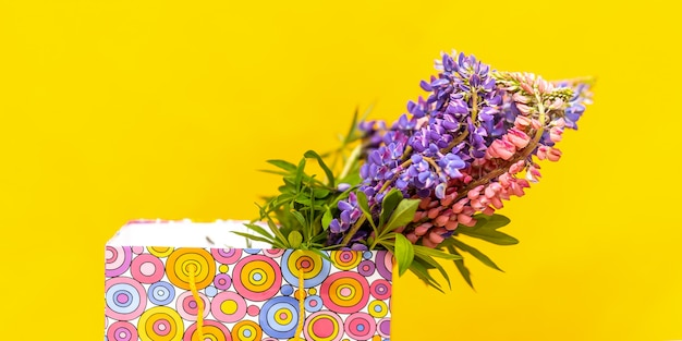 Lupine in gift colorful box.