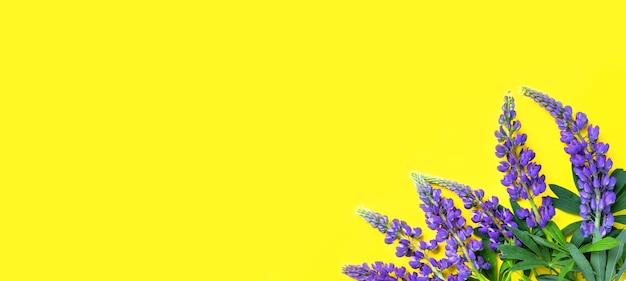 野生の紫の青い花の黄色の背景の構成の隅にあるルピナスフラットレイトップビュー