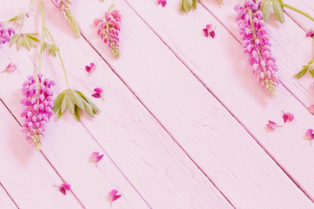 Lupine on pink wooden background
