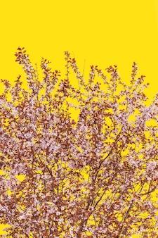 黄色のパントン13-0647の背景に緑豊かな花桜の木(ミニマリスト、垂直写真)