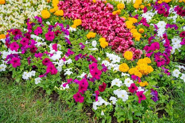 Пышные клумбы в летнем саду. яркий солнечный день. широкое фото.
