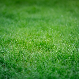 Lush green grass with shining drops of dew in the morning