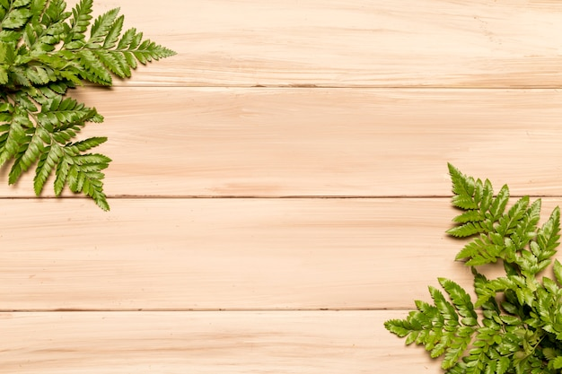 Lush green leaves of fern on wooden surface