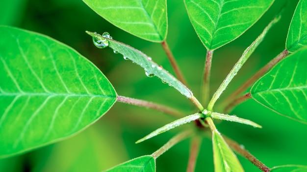 Lush green tree leaf