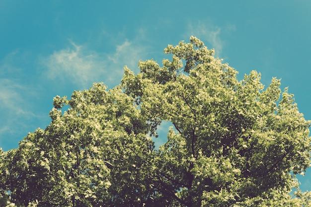 Lush green tree with leaves on blue sky background in retro colors