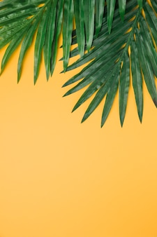 Lush leaves on yellow background