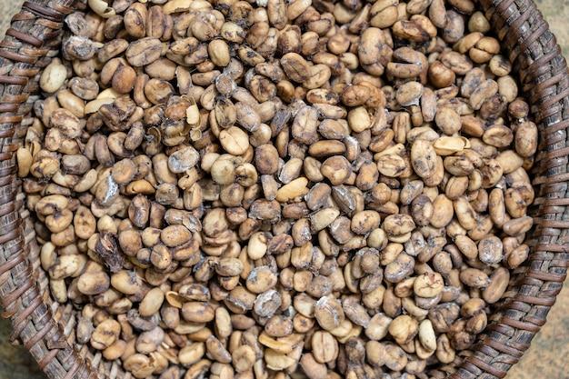 Luwak 커피, 부정한 커피 콩을 닫습니다. 코피 루왁(kopi luwak)은 아시아 야자 사향 고양이가 먹고 배변한 커피 체리를 부분적으로 소화한 커피입니다. 섬 발리, 우붓, 인도네시아