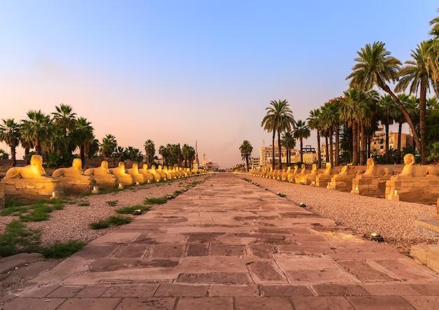 룩소르 시, 스핑크스 골목 저녁 보기, 이집트.