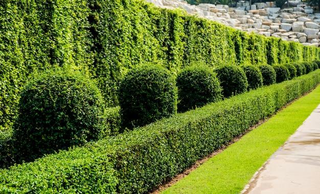 Роскошный ландшафтный дизайн тропического сада. прекрасный вид на тропический пейзаж