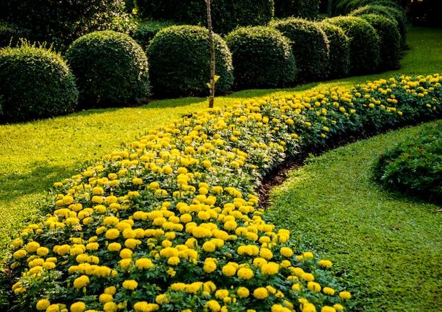 Роскошный ландшафт тропического сада.