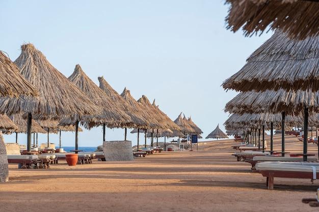 아프리카 샤름 엘 셰이크(sharm el sheikh)의 홍해(red sea) 해안에 있는 열대 리조트에 해변 의자와 짚 우산이 있는 고급 모래 해변. 검역 중 빈 해변