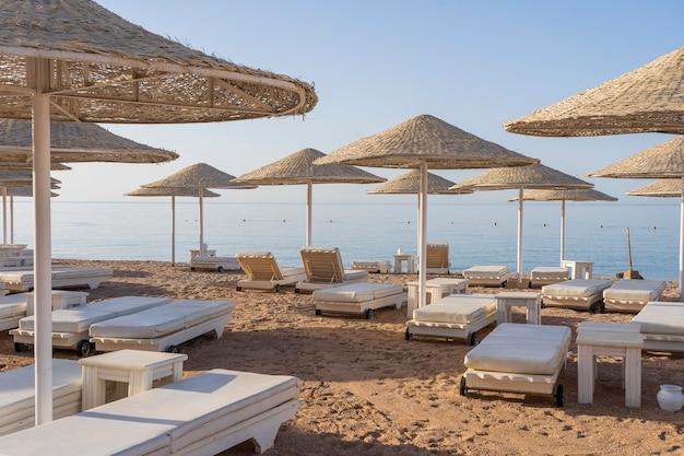 아프리카 샤름 엘 셰이크(sharm el sheikh)의 홍해(red sea) 해안에 있는 열대 리조트에 해변 의자와 흰색 짚 우산이 있는 고급 모래 해변. 검역 중 빈 해변