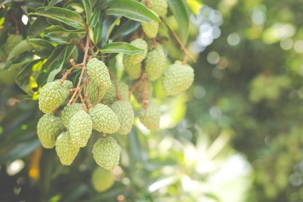 정원에서 열매 배경