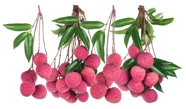 흰색 배경에 고립 된 열매 과일