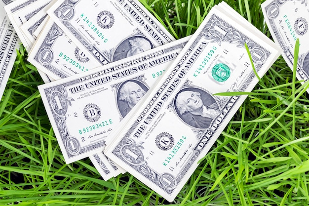 Lying on green sprouts of wheat or other cereal one-dollar bills, closeup