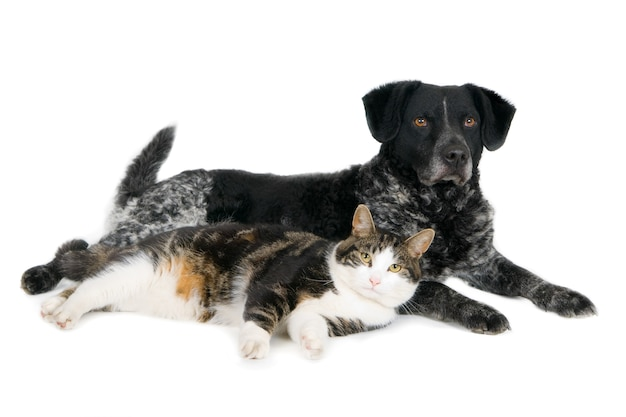 Lying looking cat together with crossbreed dog. on white.