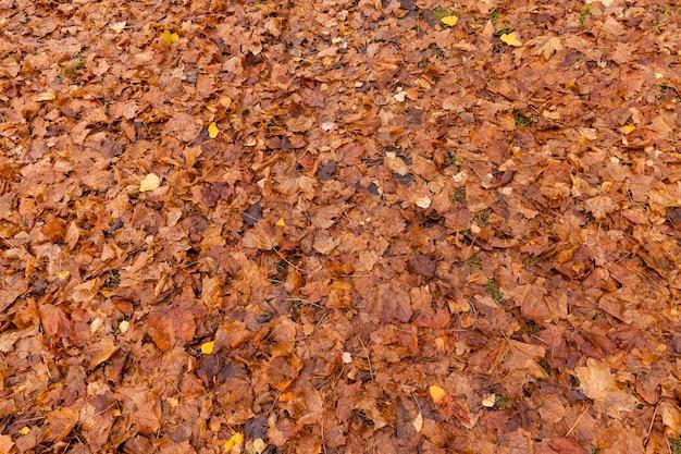 Лежа на земле, осенняя оранжевая листва в мокрой одежде начала гнить