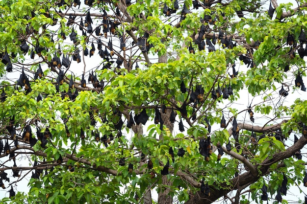라일의 날고있는 여우가 나무에 걸려있다.