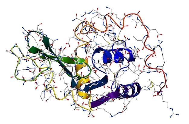 리소자임, 타액, 우유, 점액, 눈물, 달걀 흰자 등에 함유 된 천연 항균 효소