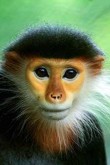 태국의 원숭이
