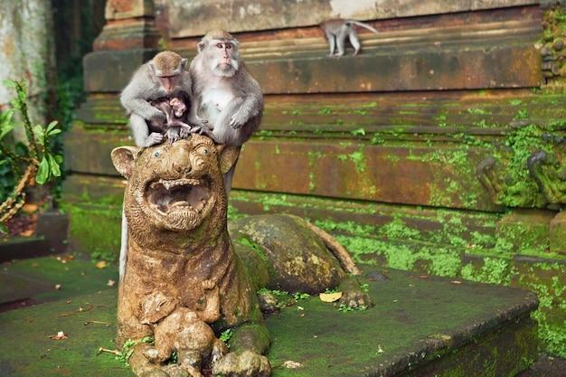 バリ島熱帯島の聖域の森の寺院の近くのライオンの彫刻に座っている小さな赤ちゃんとマカクザルの家族。アジアを旅します。インドネシアとバリの野生生物の背景と動物のテーマ。