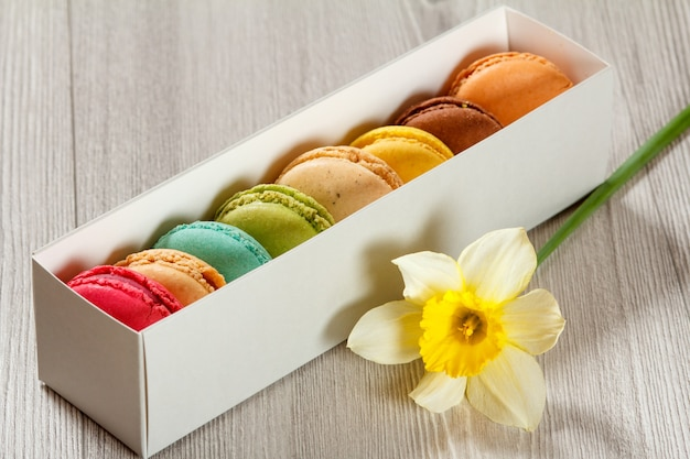 Macarons cakes of different color in white cardboard box with fresh yellow daffodil flower on grey wooden board
