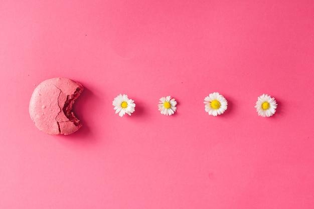 분홍색 벽에 데이지와 마카롱입니다. 플랫 레이