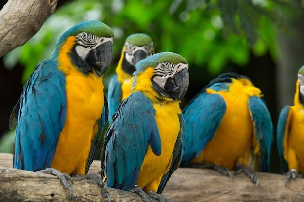 木の上に座っているコンゴウインコの鳥