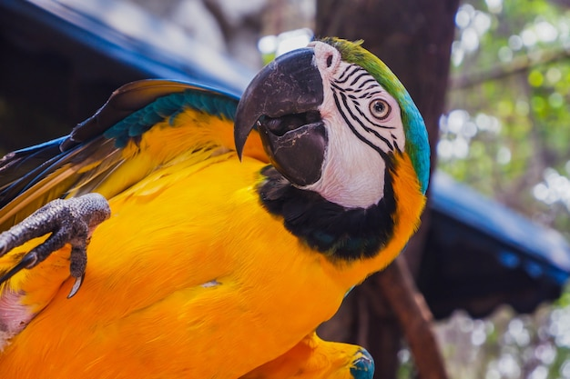 Macaw bird