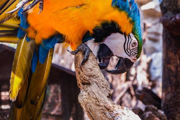 コンゴウインコの鳥
