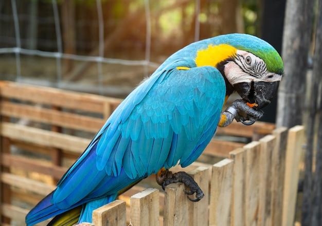 コンゴウインコ鳥
