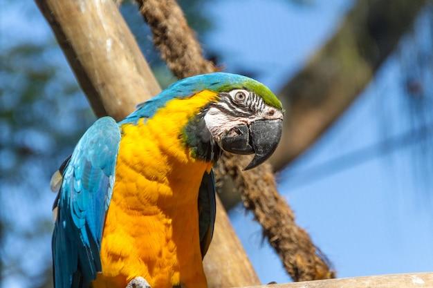 브라질 리우데자네이루의 야외에서 나뭇가지에 기대어 있는 잉꼬.