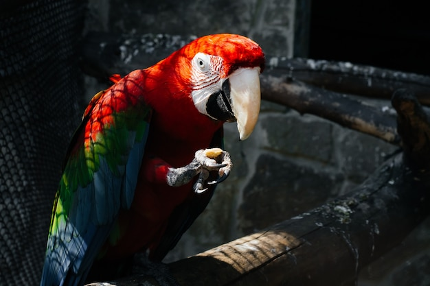 Macaw parrot close up.